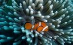 Gevonden: Nemo!